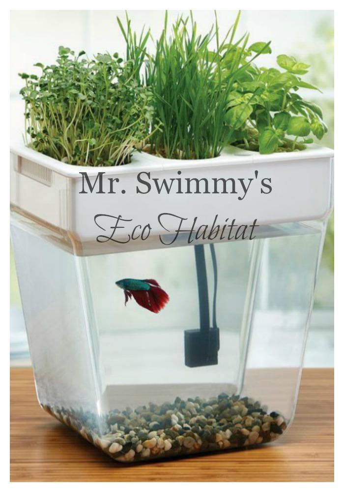 Mr. Swimmy's New Eco Habitat